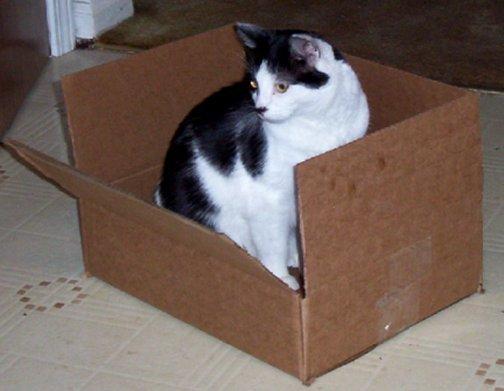 Friday Cat Blogging 03/02/07 - Alex