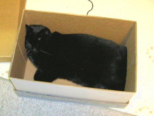 Friday Cat Blogging3/2/07 - Lightfoot