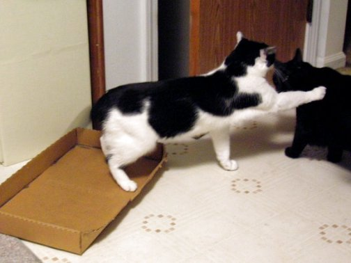 Friday Cat Blogging -2