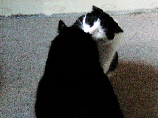 Friday Cat Blogging 3/30/07 -1