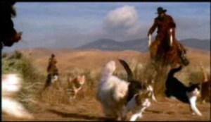 cat-herding.jpg