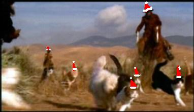 xmas-cat-herding