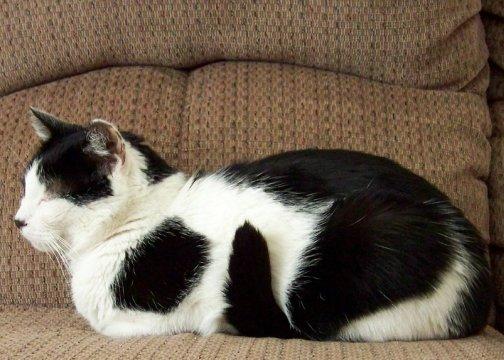 Friday Cat Blogging - Alex