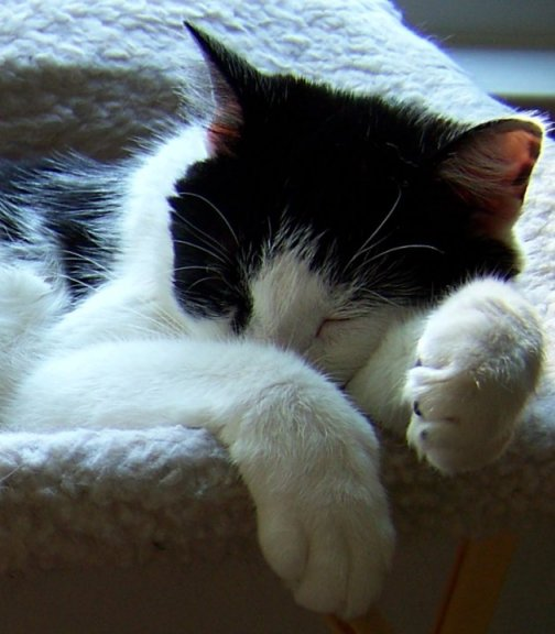 Alex Friday Cat Blogging