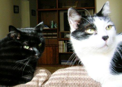 Friday Cat Blogging - Alex and Lightfoot