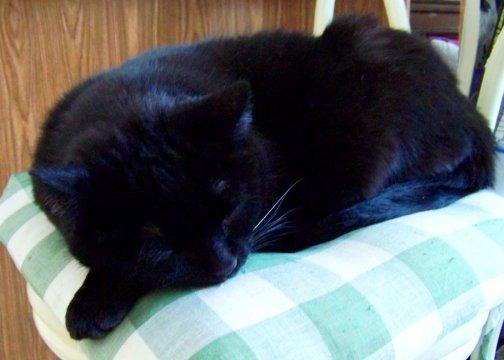 Lightfoot Friday Cat Blogging 12-26-08