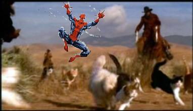 spidey-cat-herding