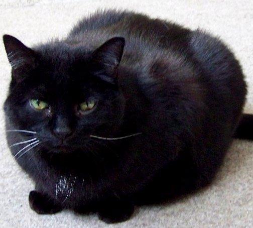Lightfoot - Friday Cat Blogging - 3-13-09