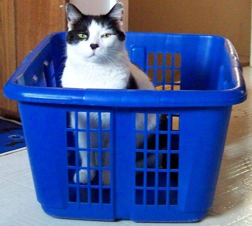 Alexander Friday Cat Blogging 03-27-09