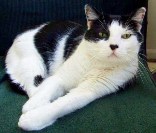 Alex - Friday Cat Blogging - 03-06-09