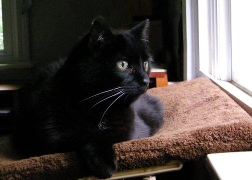Friday Cat Blogging - Lightfoot - 05-29-09