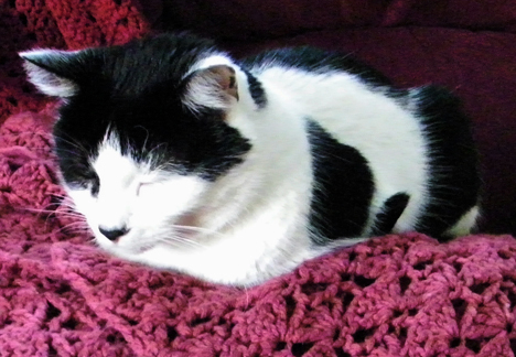 Friday Cat Blogging: Alexander asleep