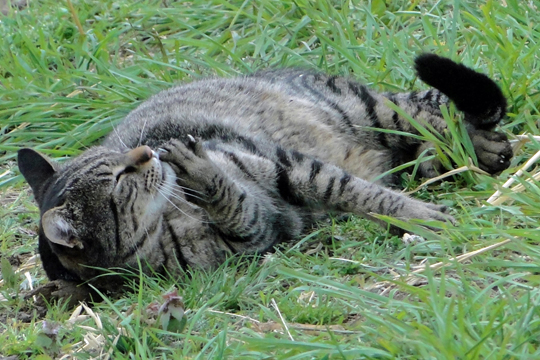 Friday Cat Blogging - Special Guest Cat